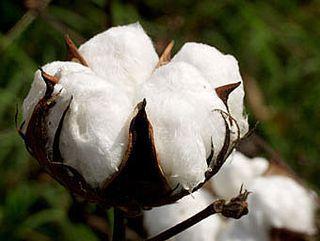 310775-cotton201